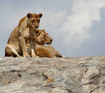 Serengeti-76