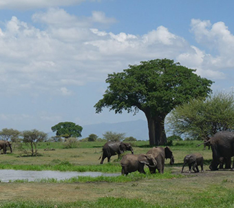 Tanzania Safari with Katikati Safaris